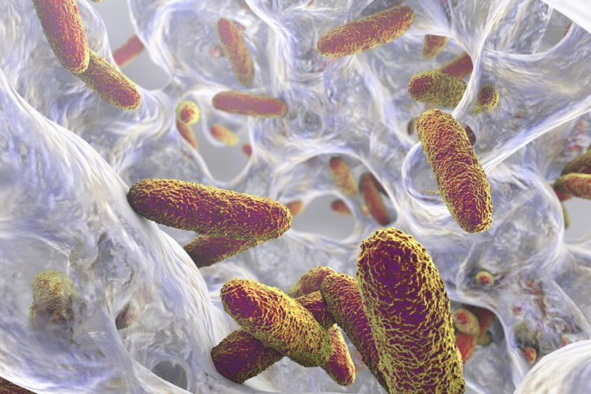 Bacteria Klebsiella