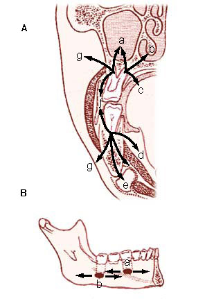 Infections of the oral cavity, neck, and head - Infectious Disease