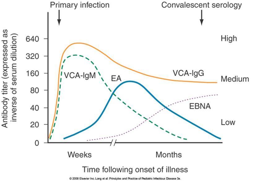 Epstein-Barr Virus (EBV) - Infectious Disease Advisor