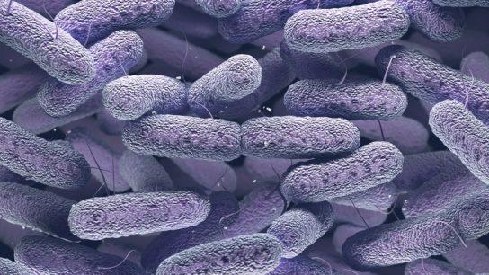 Enterobacteriaceae Bacteria