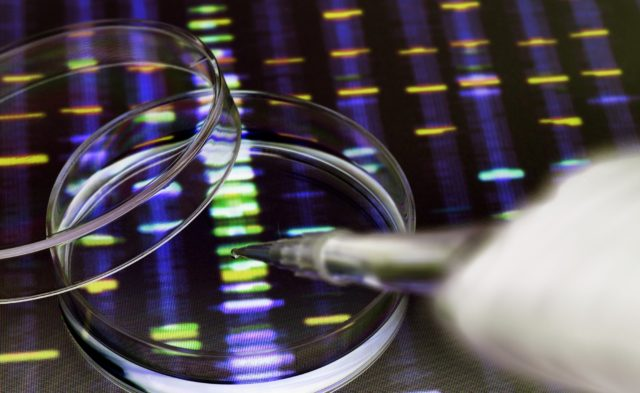 DNA inside petri dish, genetic testing