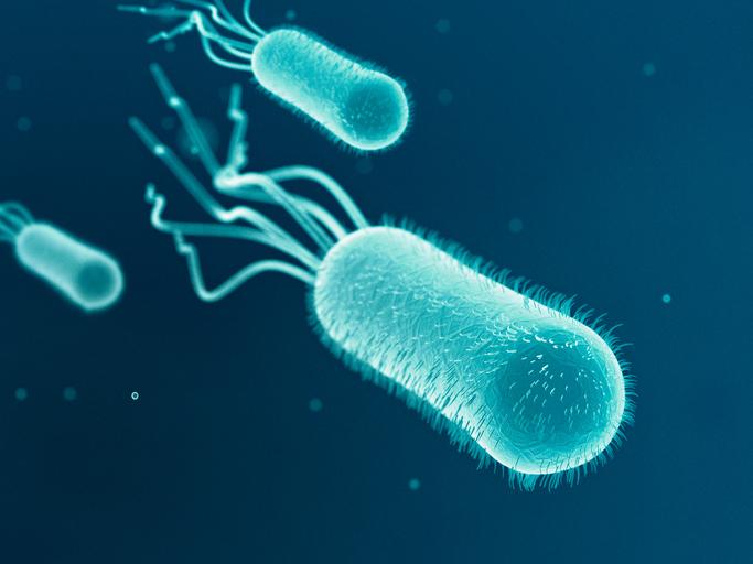 Some Antibiotics May Reduce Biofilm in Urinary Tract