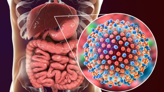 Hepatitis C virus in liver, human body