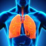 Lung illustration