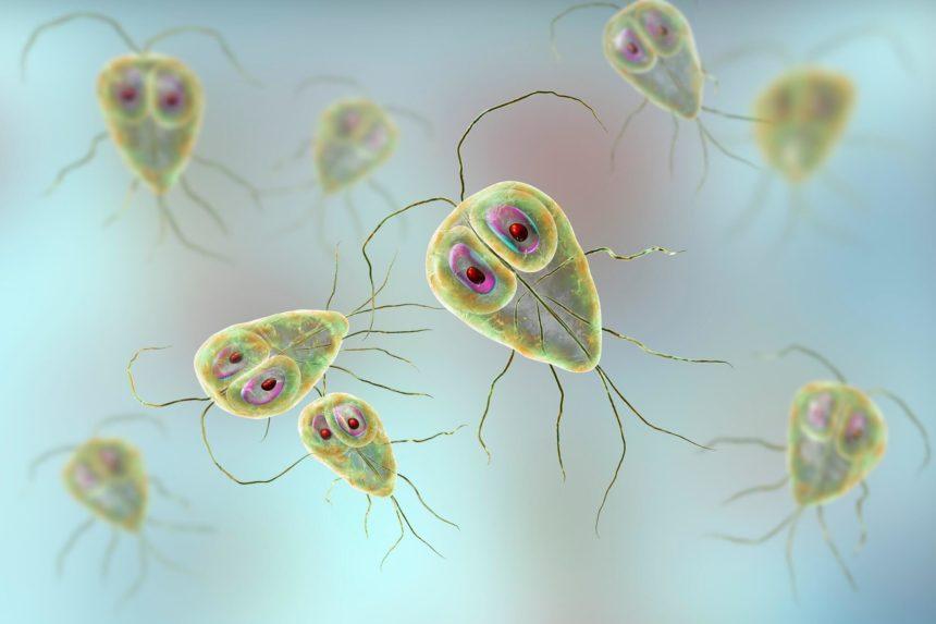 Giardiasis microbe