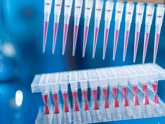 pcr polymerase chain reaction process, DNA, diagnostics
